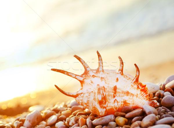 Shell plage nature mer beauté orange Photo stock © tycoon
