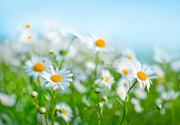 Naturaleza campo cielo azul jardín verano azul Foto stock © tycoon