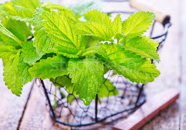 fresh mint Stock photo © tycoon