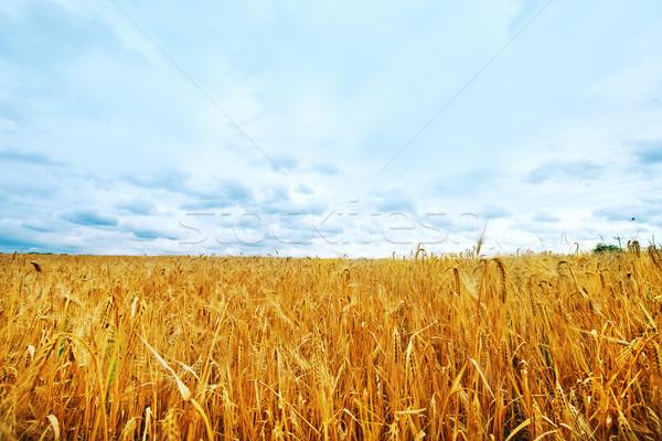 Сток-фото: небе · солнце · природы · облаке · цвета
