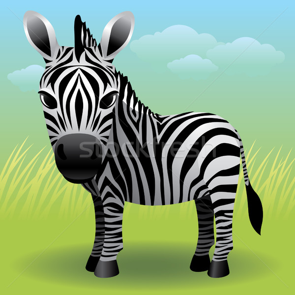 Zebra Stock photo © UltraPop