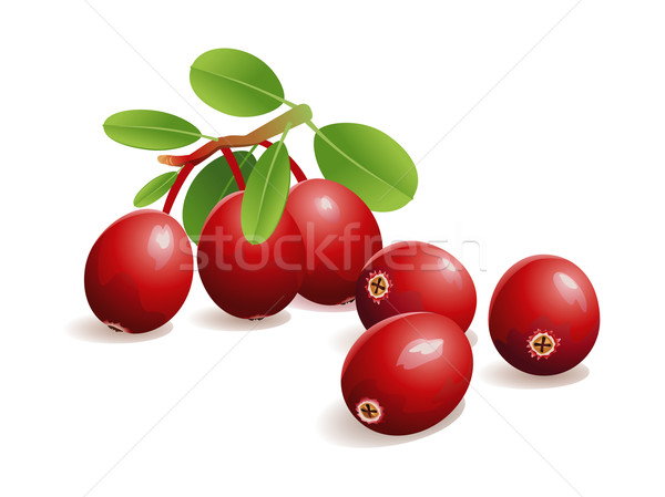 Cranberry Fruit Stock photo © UltraPop