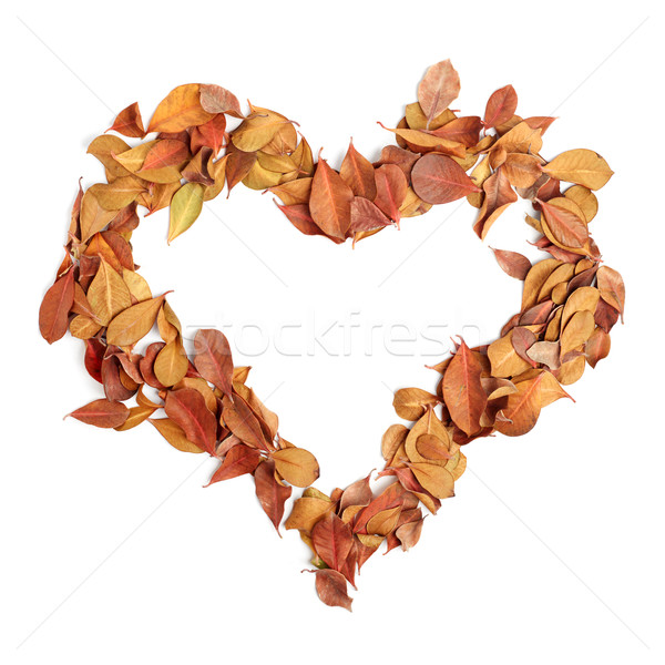 heart shape from dry leaves Stock photo © ultrapro