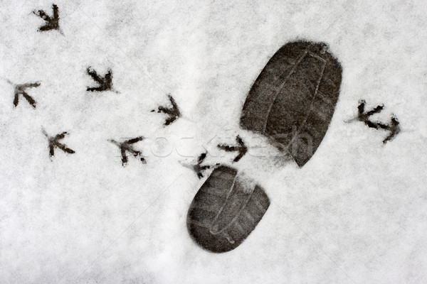footprints in a snow Stock photo © ultrapro
