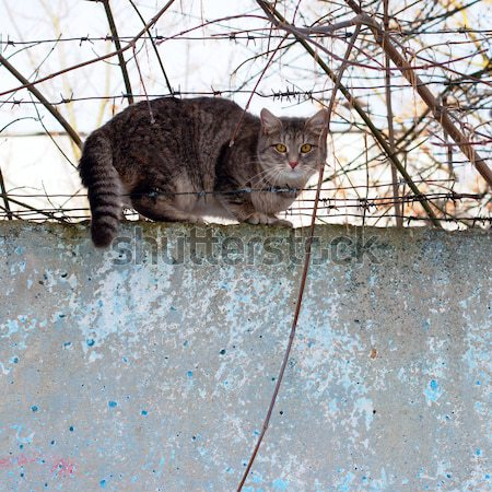 cat sitting on a concrete fence Stock photo © ultrapro