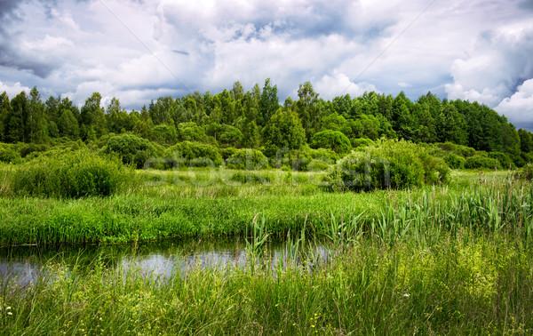 Fiume Bielorussia estate foresta sfondo Foto d'archivio © ultrapro