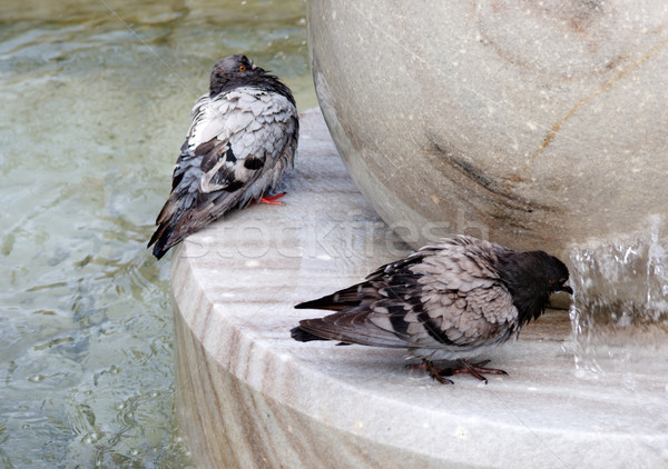 Grigio piccione acqua potabile fontana sfondo estate Foto d'archivio © ultrapro
