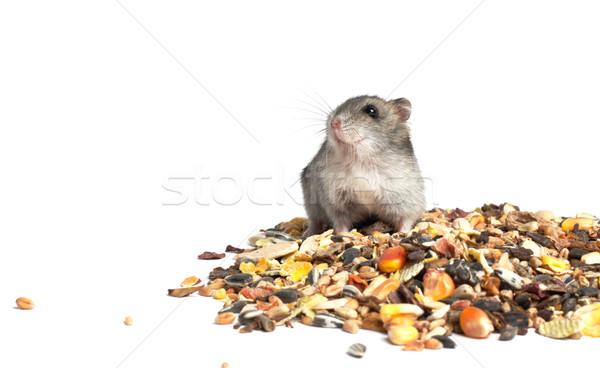 хомяк еды белый волос портрет Сток-фото © ultrapro