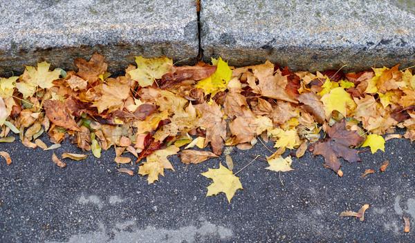 Amarelo estrada textura cidade natureza Foto stock © ultrapro