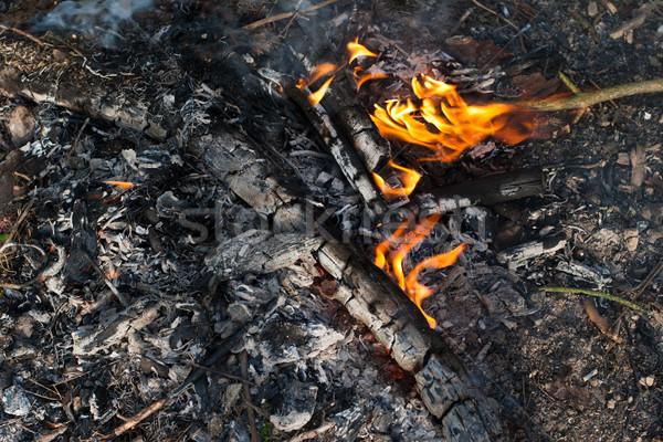 Kampvuur weinig brand avond hout zonsondergang Stockfoto © ultrapro
