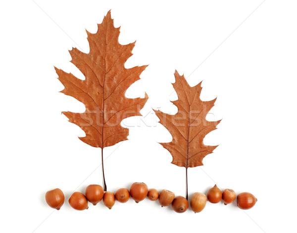Foto stock: Dois · árvores · terra · secar · carvalho · folhas
