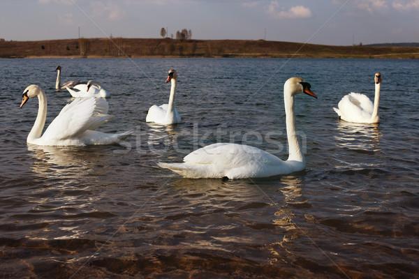 Meer voorjaar Wit-Rusland natuur achtergrond schoonheid Stockfoto © ultrapro