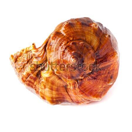 big spiked seashell on white. Stock photo © ultrapro