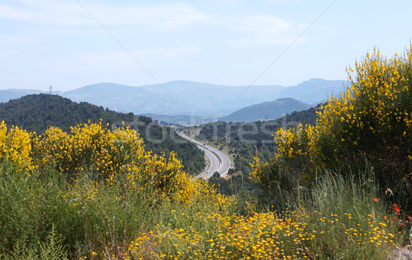 road in the mountains Stock photo © ultrapro