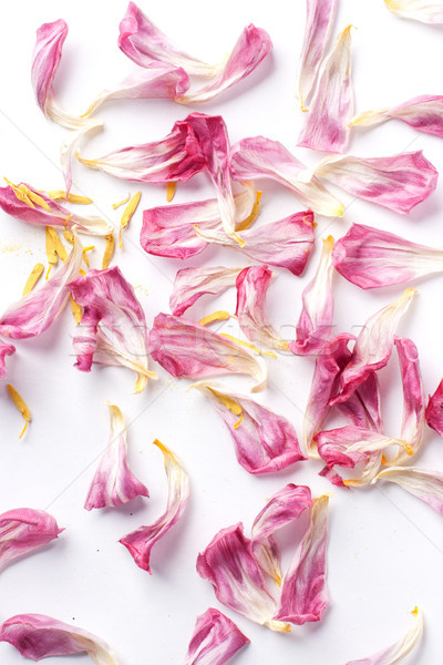 dried petals tulips lay on a white Stock photo © ultrapro