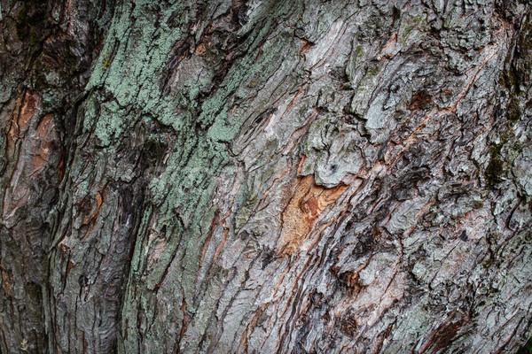 дерево Кора волна текстуры Сток-фото © ultrapro