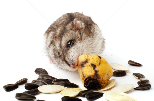 hamster holding a old banana. Stock photo © ultrapro