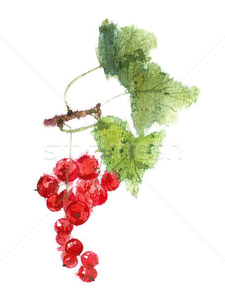 Redcurrant berries watercolor image Stock photo © ultrapro