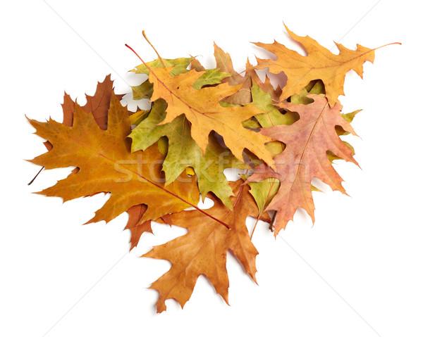 heap of yellow autumn leaves Stock photo © ultrapro
