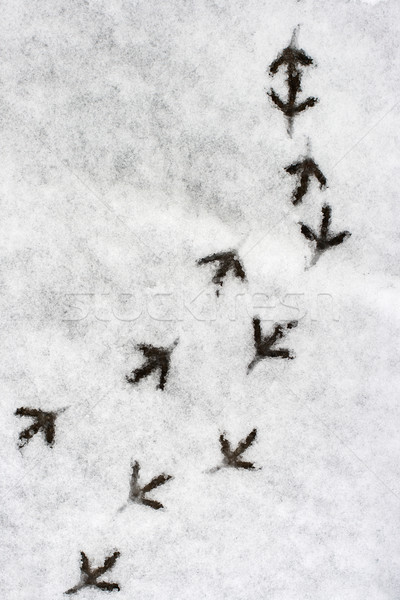 Multiple bird foot steps in a snow Stock photo © ultrapro