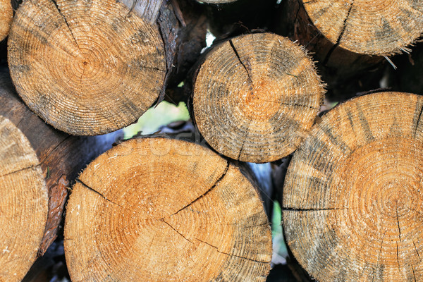 logs stacked in a woodpile closeup Stock photo © ultrapro