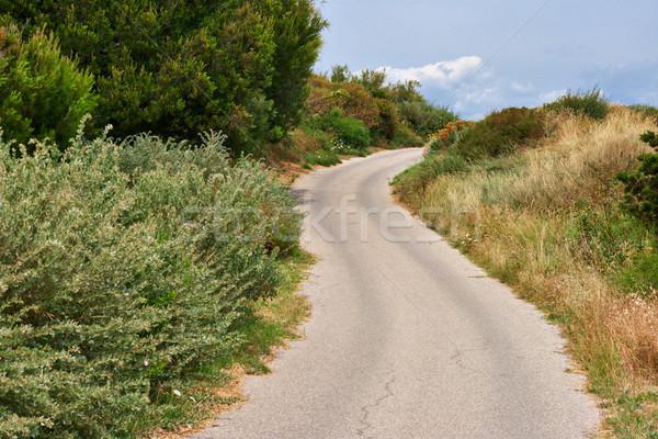 Weg heuvels zomer textuur natuur blad Stockfoto © ultrapro