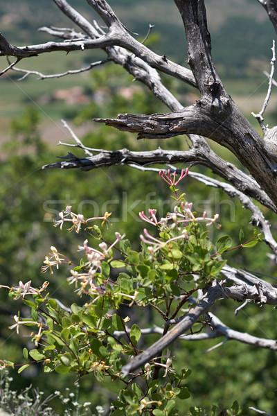 Dode bomen drogen hemel hout bos Stockfoto © ultrapro