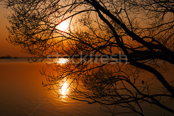 Silhouette of branching tree over lake at sunset Stock photo © ultrapro
