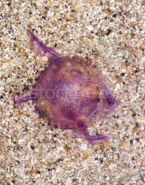 Hatalmas piros meduza tengerpart homokos tengerpart víz Stock fotó © ultrapro