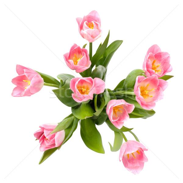 花束 チューリップ 先頭 表示 孤立した 白 ストックフォト © ultrapro