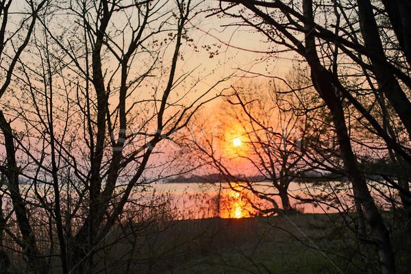 Zonsondergang boom silhouet bos meer water Stockfoto © ultrapro