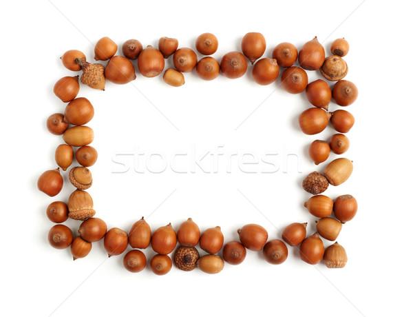 empty frame of acorns Stock photo © ultrapro