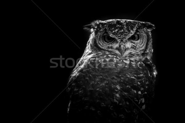 африканских совы черно белые изображение глазах Сток-фото © umbertoleporini
