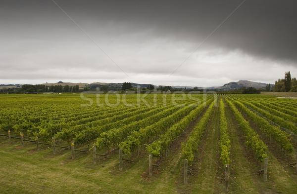 Cantina rotolare vigneto Neozelandese nubi pioggia Foto d'archivio © Undy