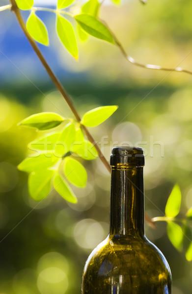 Vino vite sole pomeriggio bere sole Foto d'archivio © Undy