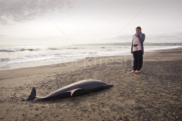 Dead Dolphin 05 Stock photo © Undy