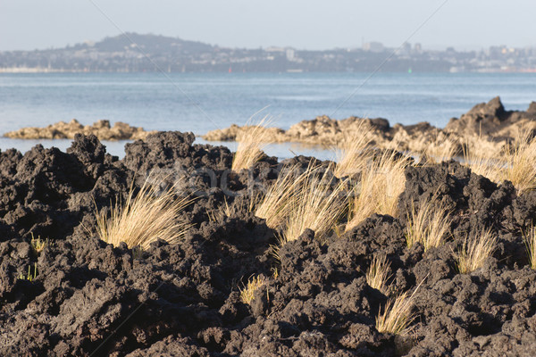 Lava gras rock eiland New Zealand Stockfoto © Undy