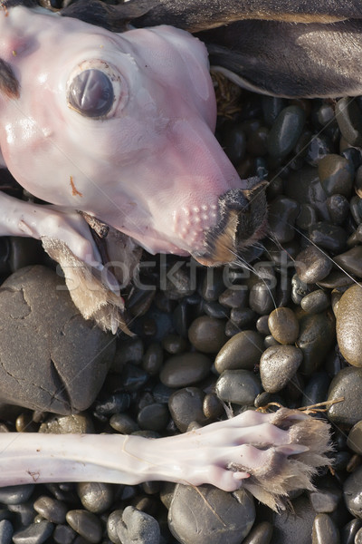 Dead Hare 02 Stock photo © Undy