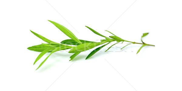 Isolado branco comida grama folha fundo Foto stock © ungpaoman