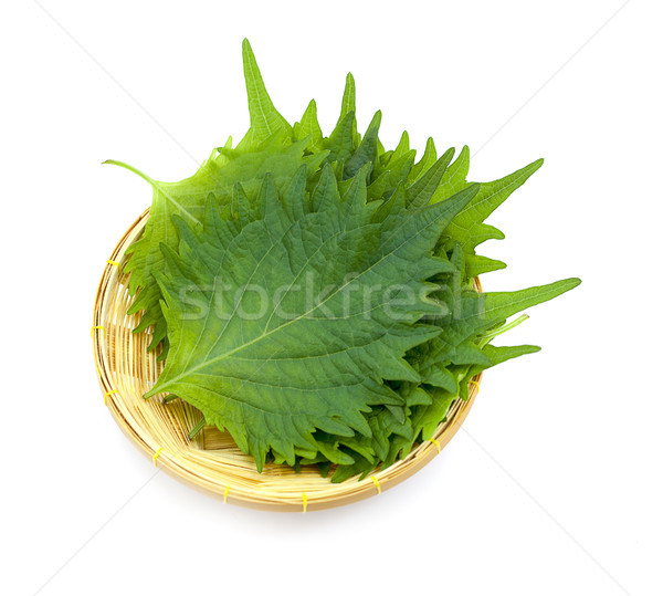 fresh green shiso leaf on white background Stock photo © ungpaoman