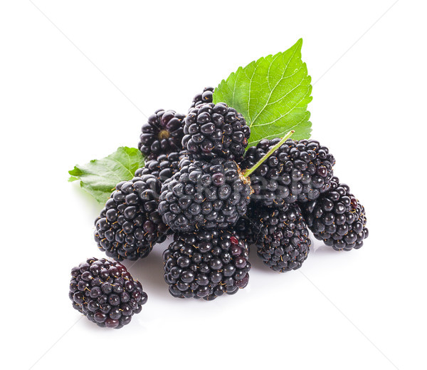 Blackberries isolated on white background. Stock photo © ungpaoman