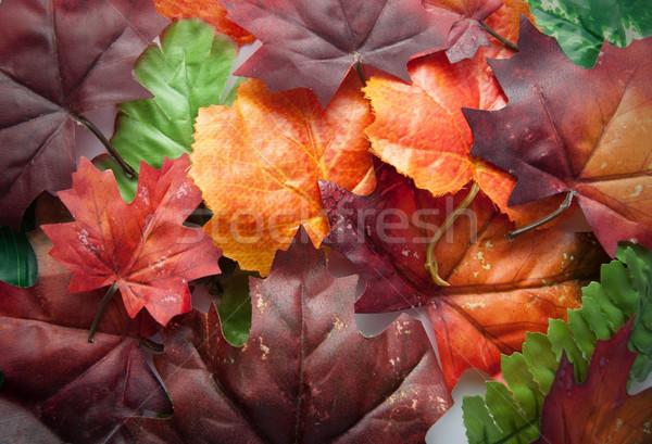 осень красный оранжевый зеленые листья дизайна Сток-фото © unikpix