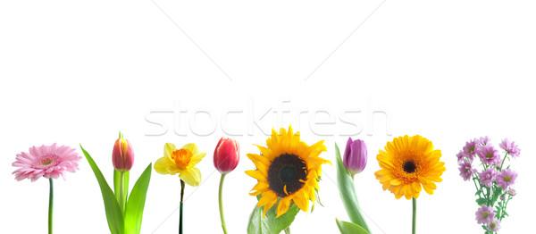 Flores da primavera fronteira branco flor flores Foto stock © unikpix