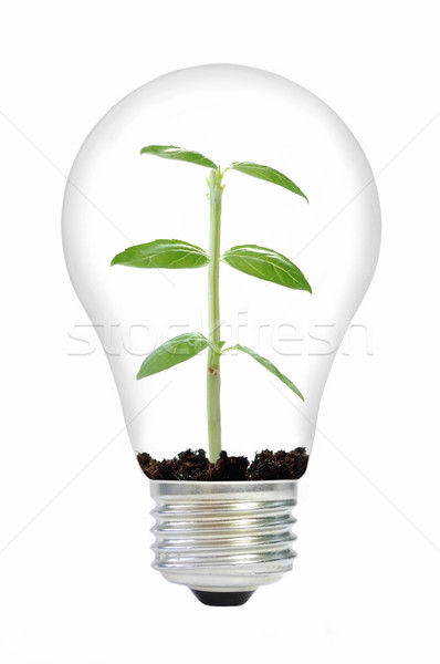 Plant in a bulb Stock photo © unikpix