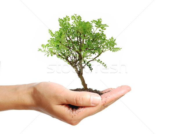 Boom hand klein bonsai business Stockfoto © unikpix