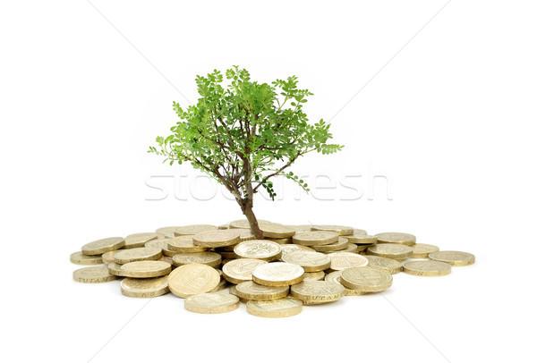 Fa növekvő pénzfa köteg érmék üzlet Stock fotó © unikpix