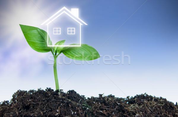 Inmobiliario casa nuevos planta de semillero símbolo casa Foto stock © unikpix