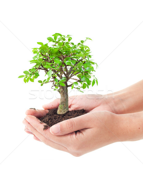 дерево рук небольшой бонсай бизнеса Сток-фото © unikpix