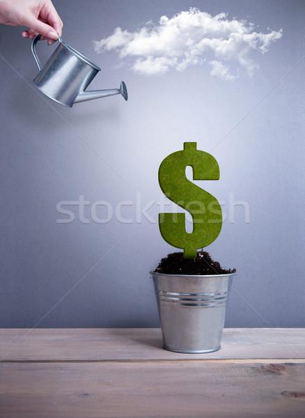 Zielone znak dolara roślin rozwój puli ceny Zdjęcia stock © unikpix