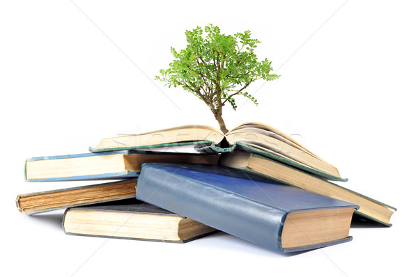 Tree growing from book  Stock photo © unikpix